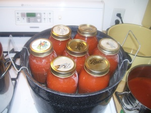 Placing tomato sauce in water bath to be boiled for 40 minutes